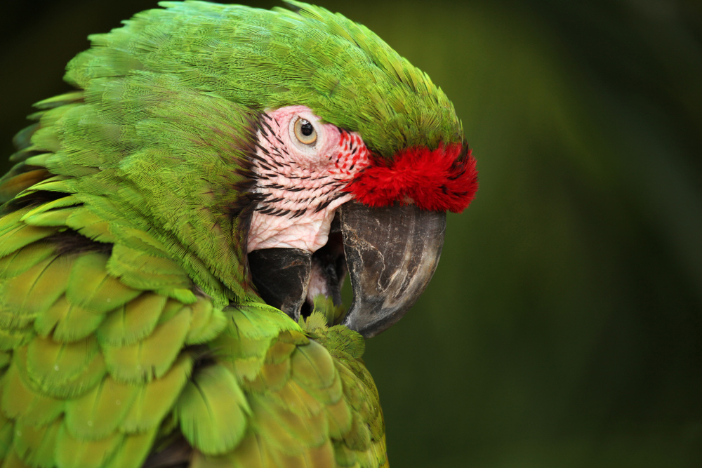 Closeup of parrot with vibrant green feathers in Cozumel, Mexico