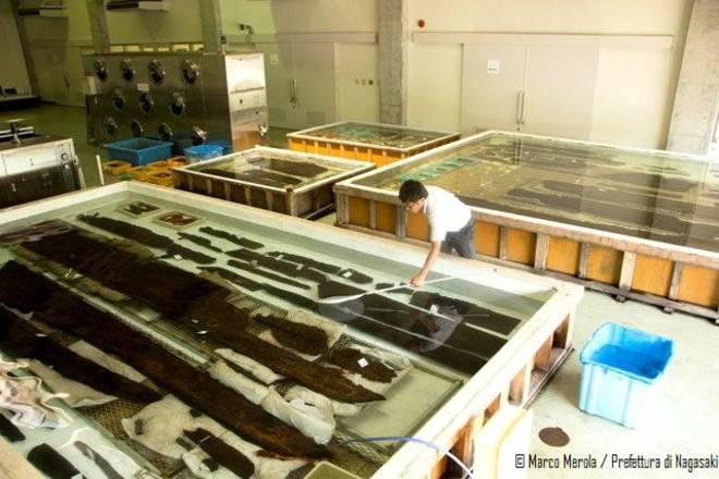 Fasciame della Flotta di Kublai Khan conservato con acqua di mare, Museo di Takashima, distretto di Nagasaki
