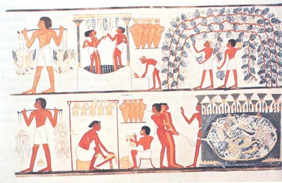 Scene di raccolta dell'uva e produzione di vino da una tomba Tebana