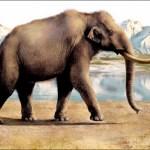 Il Mammut della steppa è una specie estinta che abitava gran parte dell'Eurasia. (Immagine: Eldar Zakirov)