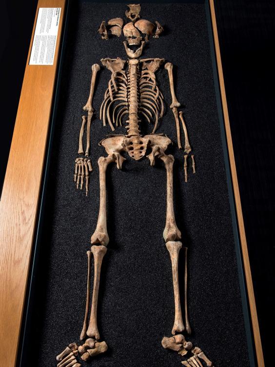 Uno degli scheletri ritrovati nel sito di Lant Street, Southwark (Foto: Museum of London)