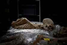 Una foto scattata il 7 luglio 2017 mostra uno scheletro umano con le mani legate alla schiena in un laboratorio presso la Scuola Americana di Archeologia di Atene (Foto: Aris Messinis / AFP)