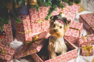 Подарки на Новый год 2018, Подарки на Новый год 2018 Собаки, собака в подарочной коробке