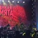 Фестиваль «Дикая мята» отменён в ночь перед открытием
