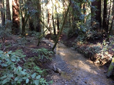 armstrong-redwood-grove-dec-2016-a-21