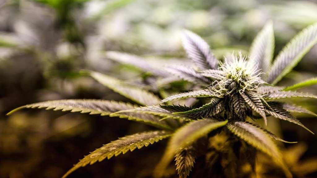 smoking recreational marijuana in las vegas