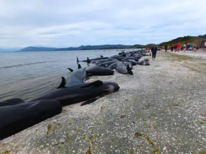 baleines-de-nouvelle-Zelande-02