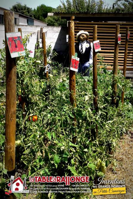 jardin-potager-epouvantail-1