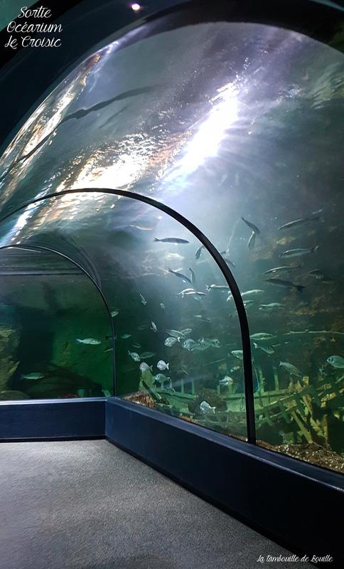 idée-sortie-famille-tourisme-loire-atlantique-ocearium-lecroisic