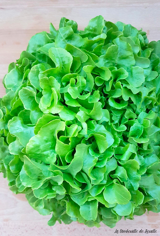 feuille-de-chêne-salade-biodynamie-coteaux-nantais