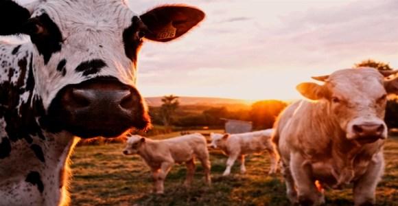 productoras de leche