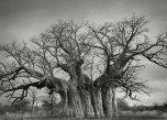 Beth Moon - Bufflesdrift Baobab