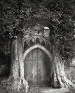 Beth Moon - Sentinels of St. Edwards. England