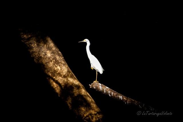 Lencois Maranhenses uccello