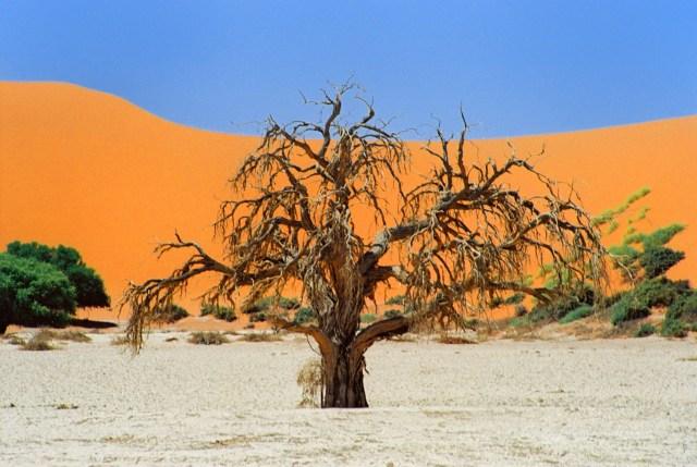 Namibia Sossusvlei tree