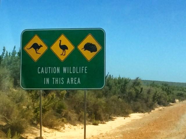 Western Australia cartellone