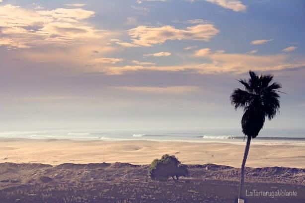 balene della baja california spiaggia ad ensenada