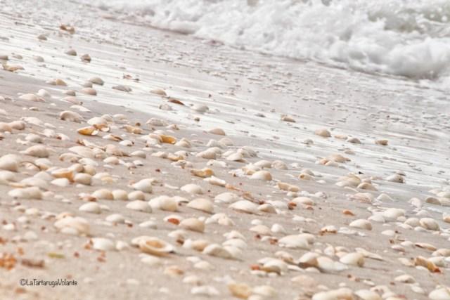 Florida Spiaggia di Sarasota