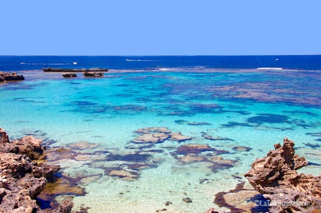 western australia sud, spiaggia di rottenest island