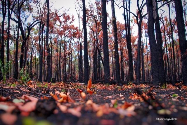 western australia sud, foresta
