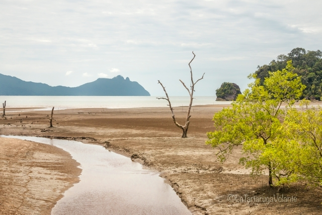 Borneo, Bako NP bassa marea