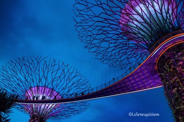 Singapore, particolare dei Super Tree