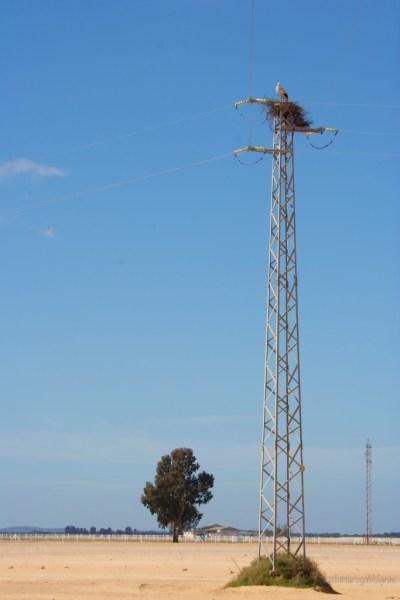 viaggio a Doñana, cicogna e palo della luce