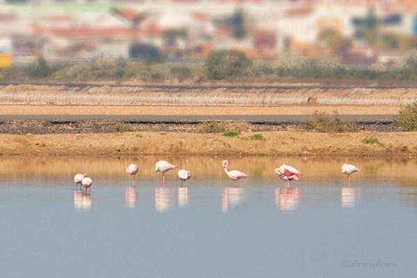 Doñana fenicotteri rosa