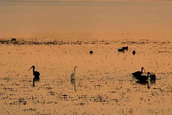 Doñana, laguna
