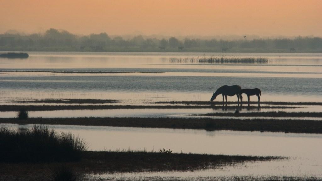 Doñana, cavalli al tramonto