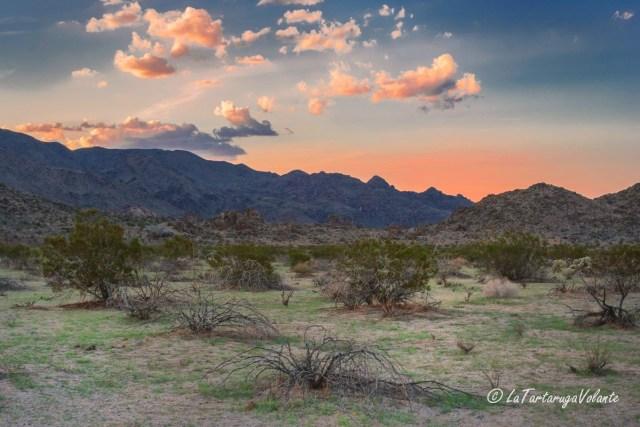 California e Death Valley, Joshua Tree sunset