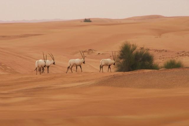 Dubai, deserto arancione