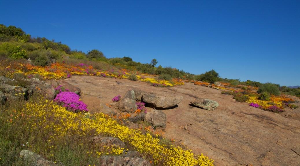Sudafrica, Namaqualand come un giardino