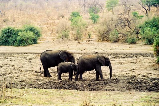 Botswana, elefanti a spasso