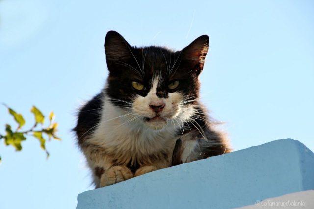 il gatto di koskinou
