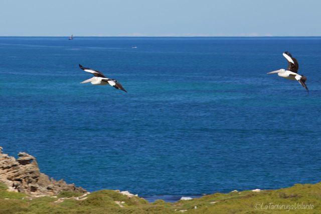 gli uccelli di penguin island