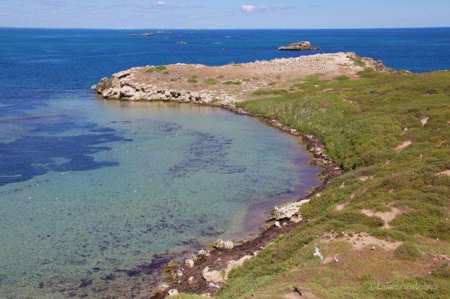isola penguin island