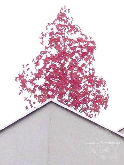 LB red tree