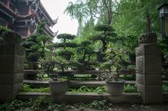 Lots of Bonsai, the actual temple in the background