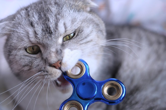 Fidget spinner and a cat