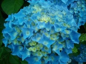"""Rien que du """"Bleu"""""""