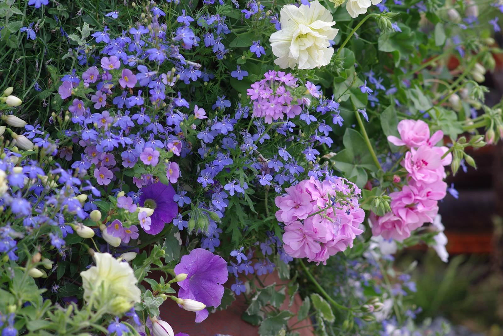 fleurir une jardiniere pour l ete la