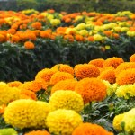 Flowers Images HD | Beautiful Flower Images Wallpapers