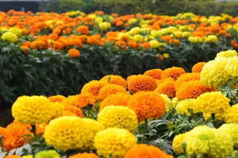 Flowers Images HD Wallpapers