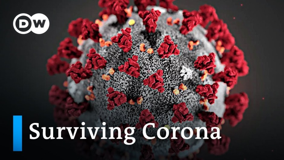 What occurs while you're contaminated with the COVID-19 coronavirus? | DW Information
