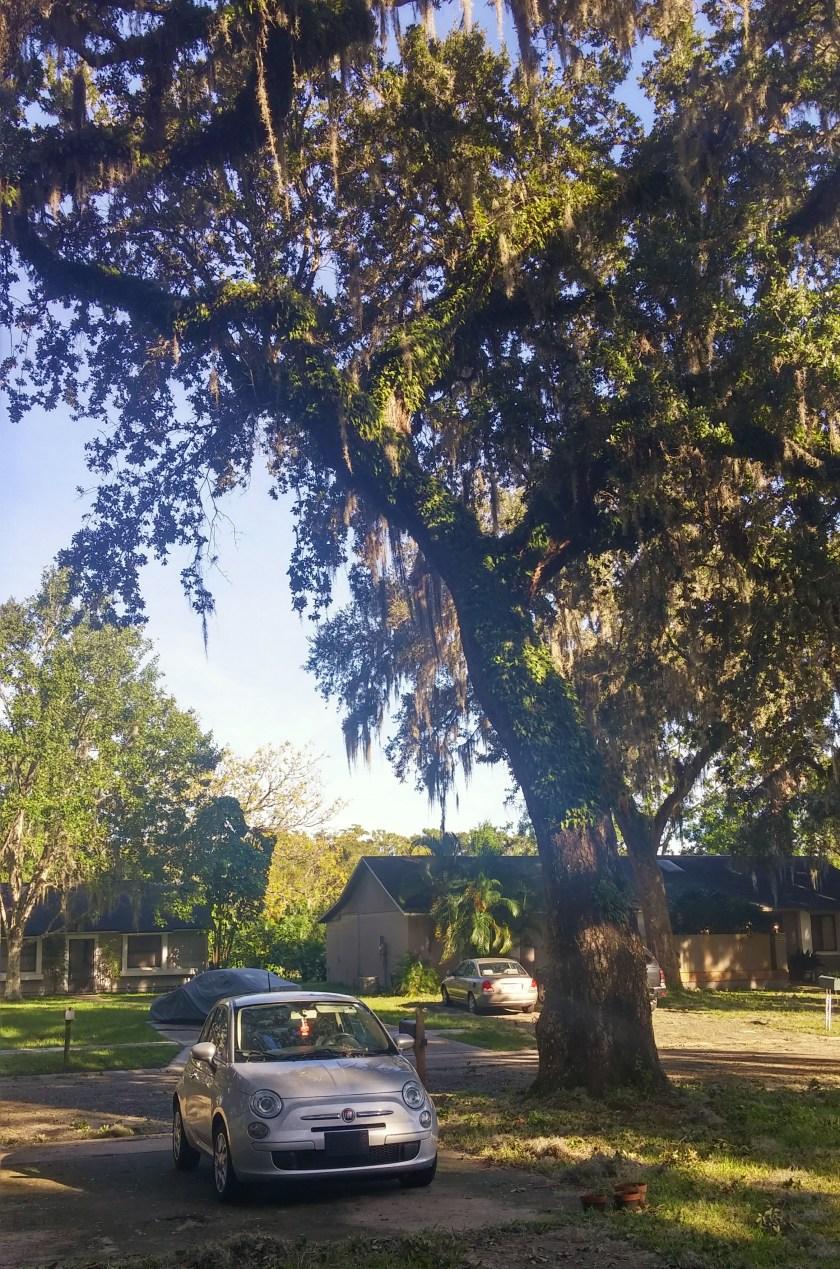 car_under_tree