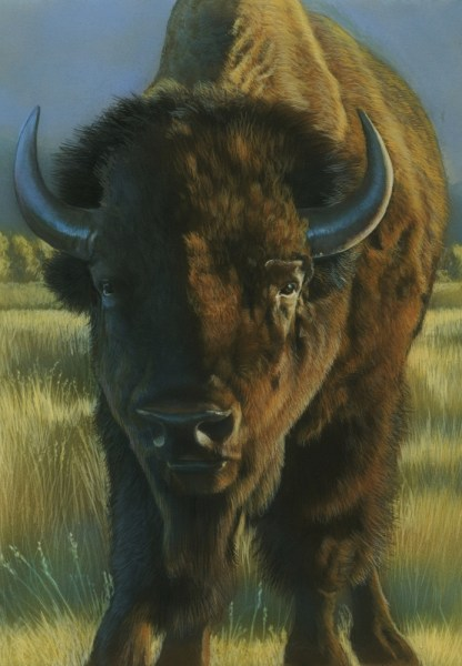 Face to Face - American bison by Karen Latham  small