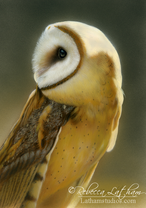Barn Owl, watercolor and sterling silver on board, ©Rebecca Latham