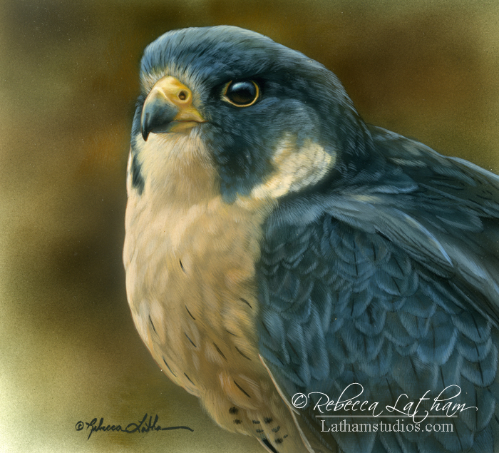 Peregrine Falcon, watercolor and sterling silver on board, ©Rebecca Latham
