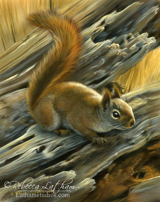 Red Squirrel, watercolor and sterling silver on board, ©Rebecca Latham